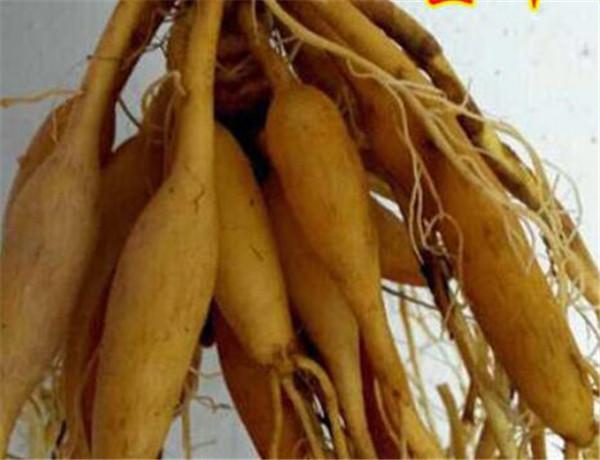 萱草根的功效与作用 萱草根和黄花菜根的区别