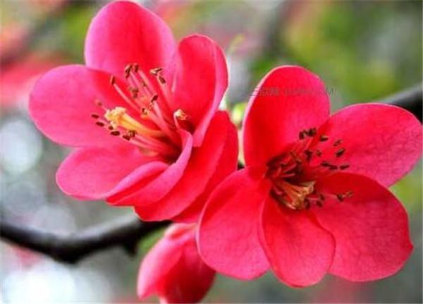 梅花的特点和象征意义 关于梅花的诗句