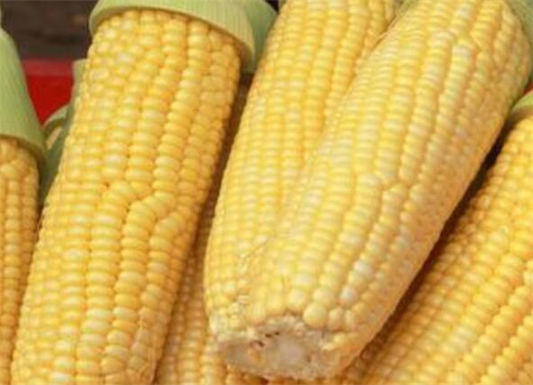 甜玉米是不是转基因 甜玉米种子种植技术
