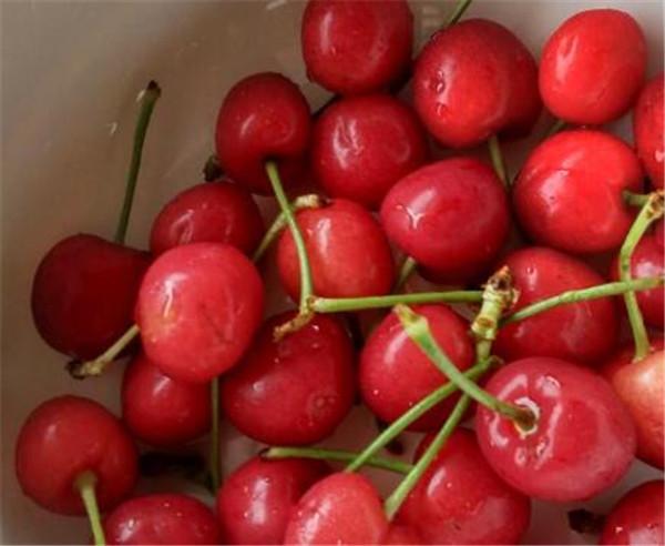 樱桃的营养价值 樱桃汁的制作方法