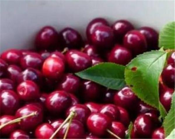 欧洲甜樱桃多少钱一斤 欧洲甜樱桃什么时候成熟