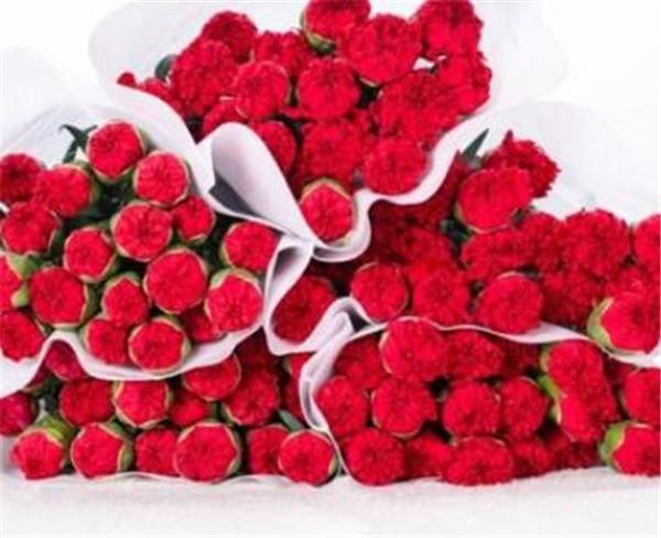 红色康乃馨花语和寓意 康乃馨的象征意义