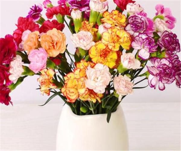 多头康乃馨的花语和寓意 多头康乃馨怎么养水养