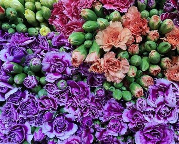 多头康乃馨怎么插花瓶好看 多头康乃馨开花了能保持几天