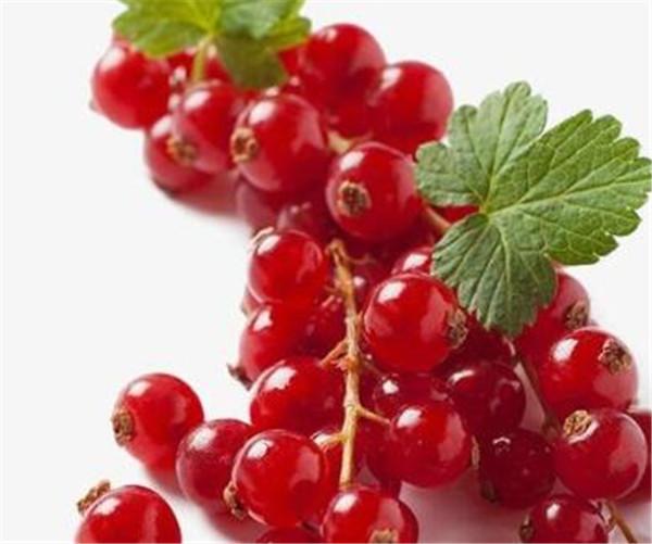 蔓越莓干价格多少钱一斤 蔓越莓为什么买不到新鲜的