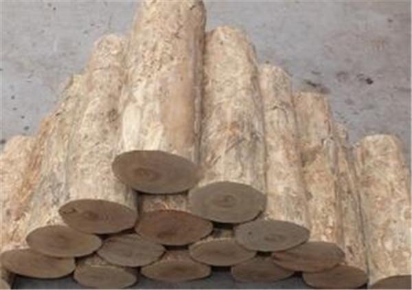 黄杨木鉴别方法 黄杨木市场价多少一斤