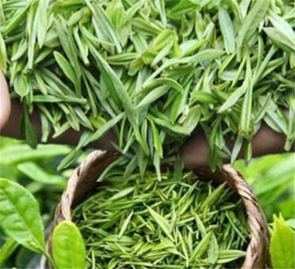 古丈毛尖是绿茶吗 古丈毛尖价格多少钱一斤