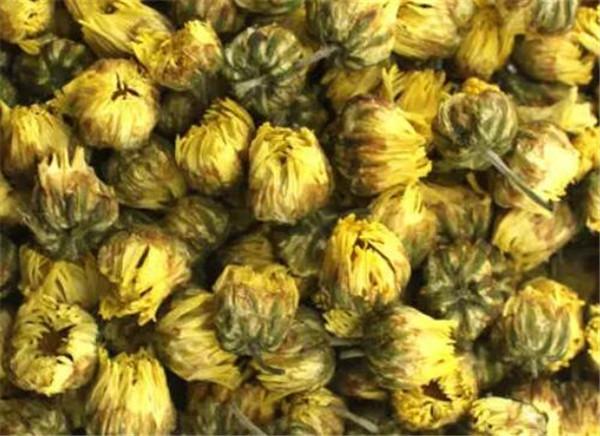 胎菊花的功效与作用与禁忌 胎菊和杭白菊的区别