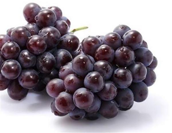 玫瑰香葡萄的功效和作用 玫瑰香葡萄怎么种植