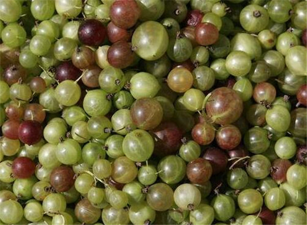 水葡萄能吃吗 水葡萄的功效与作用