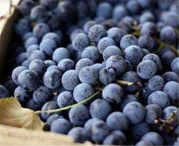 黑加仑的功效与作用 黑加仑葡萄干多少钱一斤
