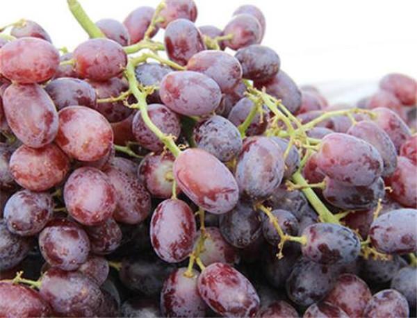 无籽葡萄是打避孕药的吗 无籽葡萄怎么种出来的