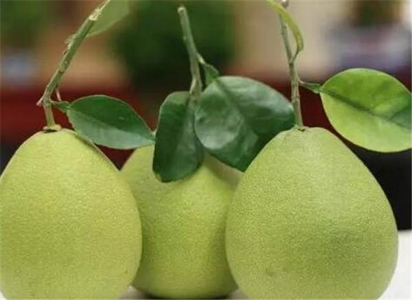 文旦柚成熟的季节 文旦柚一年四季都有吗
