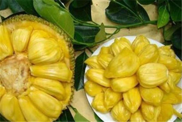 菠萝蜜的营养价值 菠萝蜜有减肥功效吗