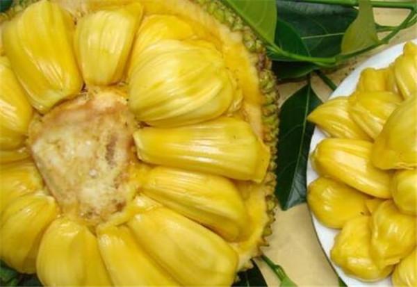 吃完菠萝蜜千万别碰5种食物 菠萝蜜吃多了湿气重吗