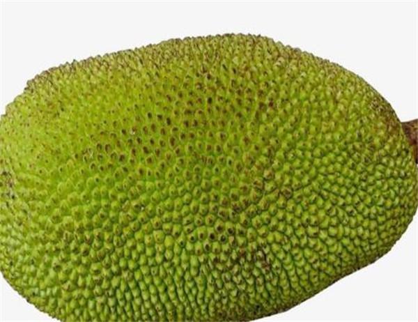 菠萝蜜和榴莲的区别 菠萝蜜一次可以吃几颗