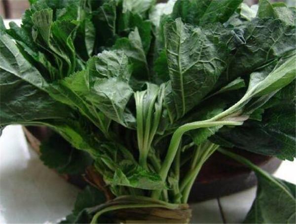 葵菜的营养价值 葵花菜的功效和作用