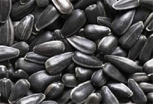 油葵怎么种长得好 油葵一亩地几斤种子