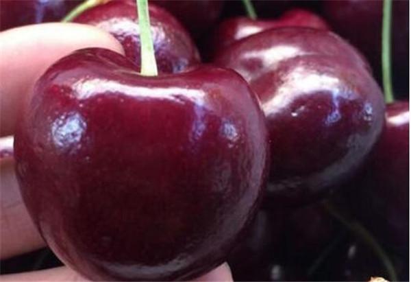 车厘子和樱桃是一样吗 车厘子的功效和作用营养