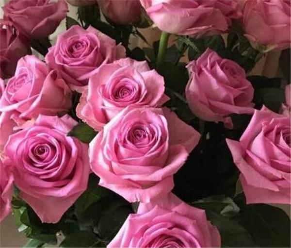 玫瑰花种植技术和方法 玫瑰花价格大概在多少钱一朵
