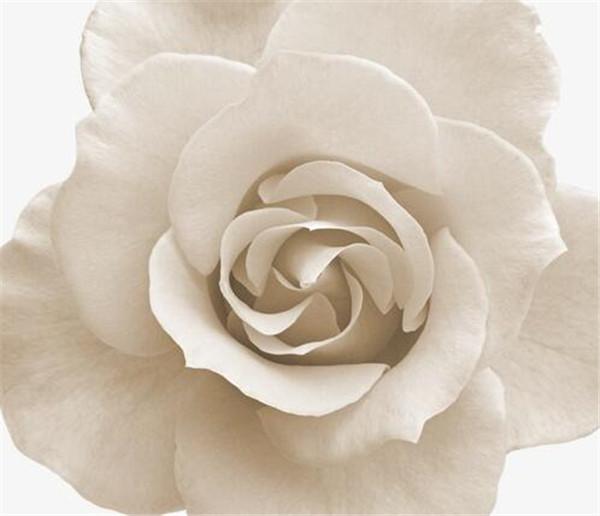 白玫瑰配满天星花语 白玫瑰适合送女朋友吗