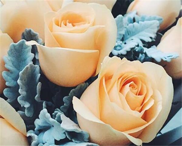 香槟玫瑰的花语是什么 香槟色玫瑰适合送哪些人