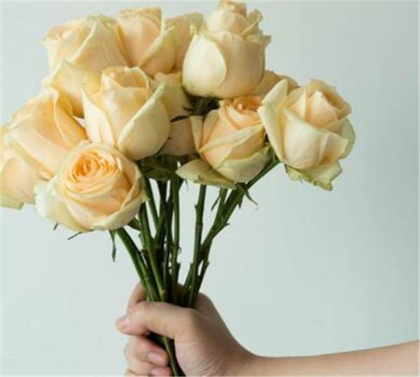 香槟玫瑰不能随便送人吗 香槟玫瑰多少钱一只