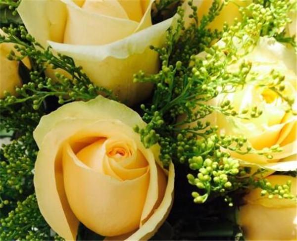黄玫瑰代表什么意思 黄玫瑰的花语寓意是什么