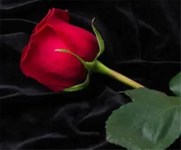 红玫瑰的是代表什么 11朵红玫瑰花语