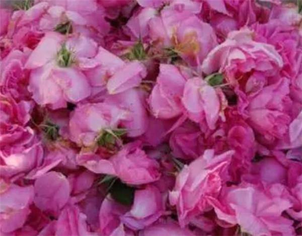 大马士革玫瑰纯露骗局 大马士革玫瑰的功效与禁忌