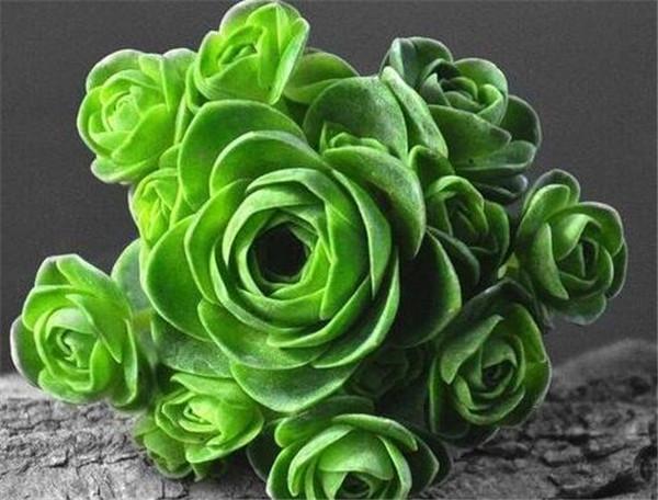 山地玫瑰叶子发黄是什么原因 山地玫瑰怎么繁殖