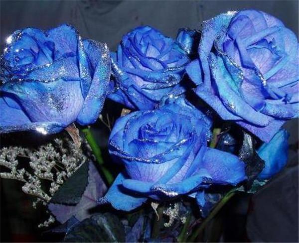蓝玫瑰花多少钱一多 蓝色玫瑰是真花吗图片