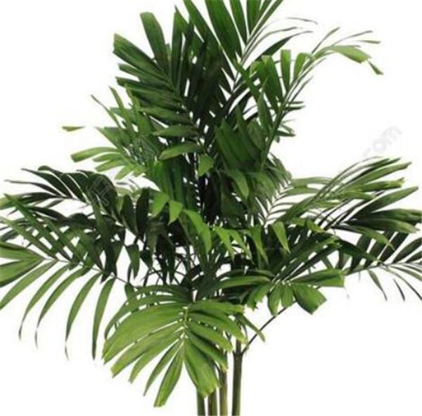绿植盆栽可以用农用复合肥吗 室内绿植用什么肥料好