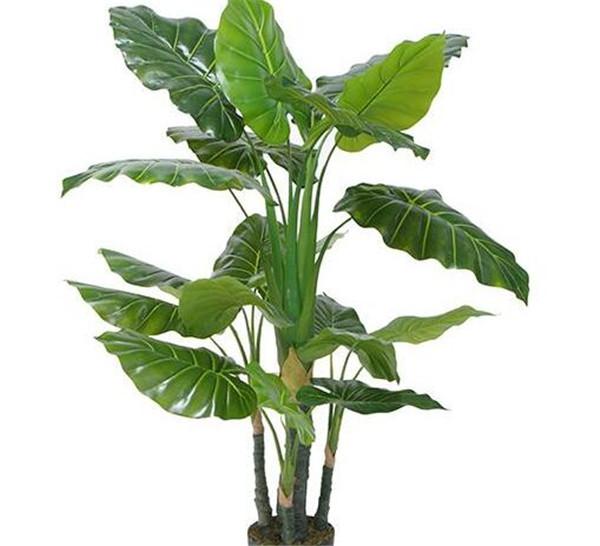 滴水观音分株繁殖方法 扦插的滴水观音多久长出叶子