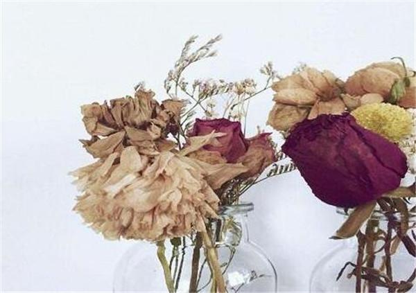 如何制作干花 鲜花怎么变成干花步骤