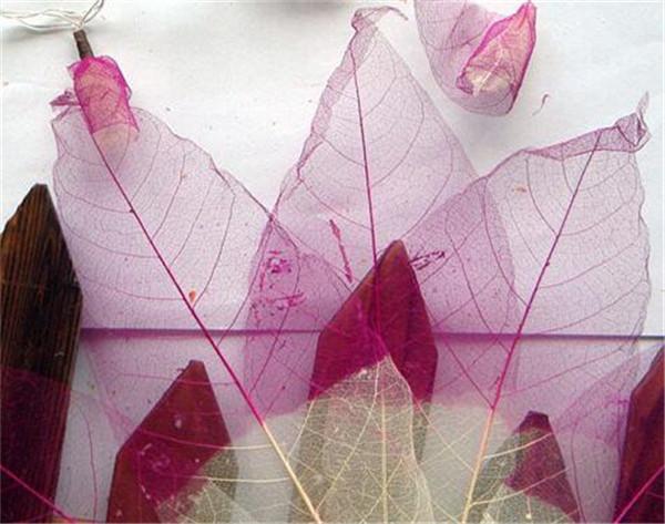 叶脉干花的花语是什么 叶脉牡丹花干花制作方法
