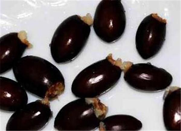 荔枝核怎么种出盆栽 荔枝核怎么取出来