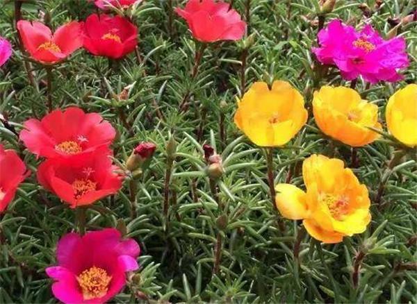 并蒂莲的象征意义是什么 并蒂莲是荷花还是莲花