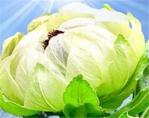 新疆天山雪莲产地 天山雪莲的正确吃法