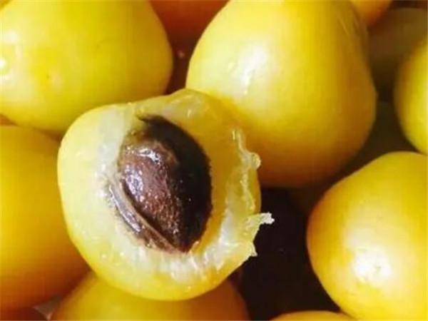 小白杏哪里产的最好 小白杏仁每天吃几粒
