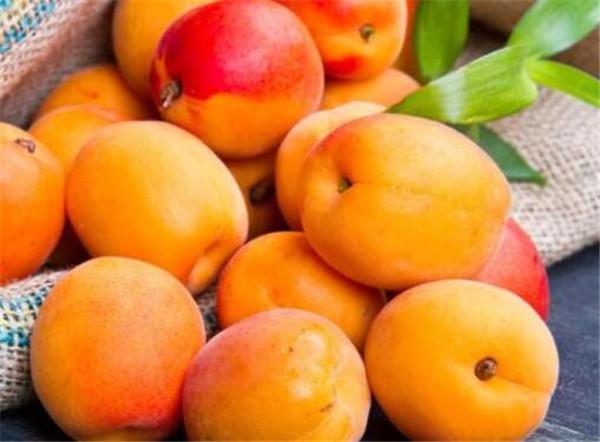 孕妇可以能不能吃杏子吗 杏子什么时候成熟