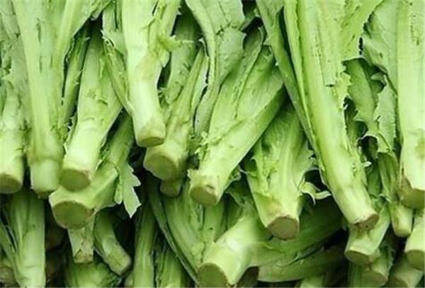 油麦菜的功效与作用 油麦菜是凉性还是热性