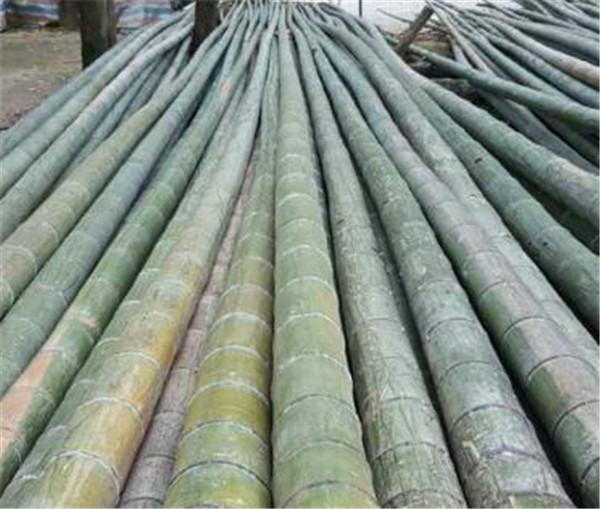 毛竹盆景养殖注意事项 最适合庭院种植的竹子有哪些