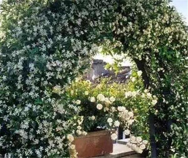 耐寒零下30度的庭院花 能在黑龙江过冬的花卉有哪些