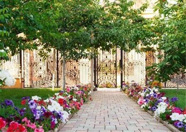 北方室外耐寒的庭院植物 哈尔滨能过冬的庭院花