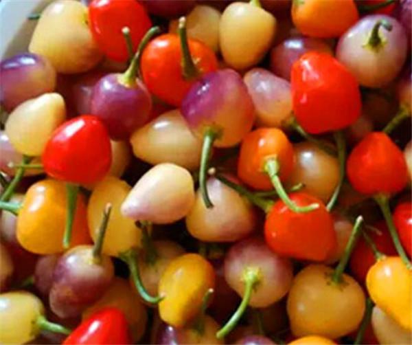 彩椒的营养价值及功效与作用 长期吃彩椒有什么好处