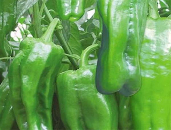 菜椒上火吗 菜椒减肥期间能吃吗